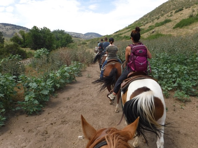 a guide horseback riding group riding horses in Denver Colorado on White Ranch Open Space