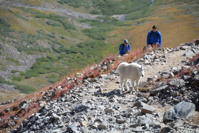 Rocky Mountain National Park Tours with Colorado Wilderness Rides And Guides